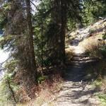Cave Falls Yellowstone Trail