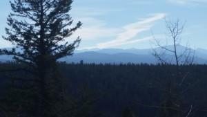Teton Mountains from Yellowstone near Cave Falls